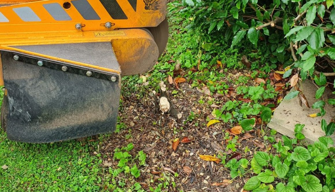 Tree stump grinding at Cressing, near Braintree, Essex. Here I had to remove some cherry tree roots that were making the...