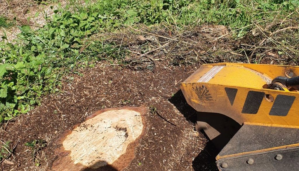 Tree stump grinding between Finchingfield and Hempstead, near Steeple Bumpstead, Essex. Here I had a row of approximatel...