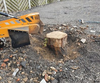 Tree stump grinding near Basildon, Essex. Another tree stump in the same area, this time a Willow stump that was in the ...