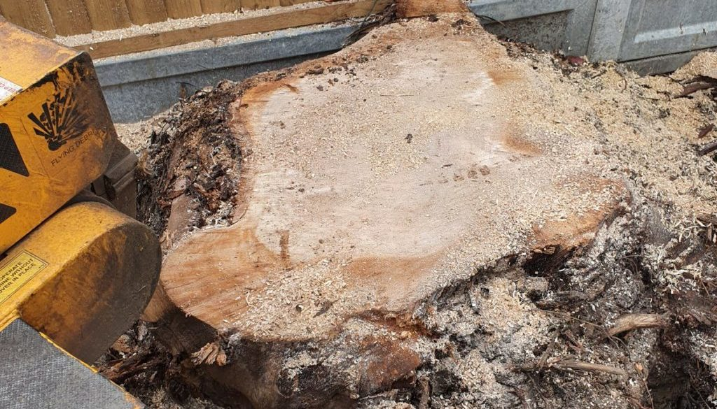 Tree stump grinding near Basildon, Essex. Here I had to remove a large eucalyptus tree stump, approximately 5 foot acros...