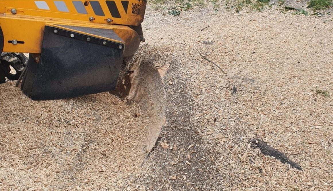 Tree stump grinding near Wickford, Chelmsford, Essex. The tree stump was an extremely hard Hornbeam tree on the edge of ...