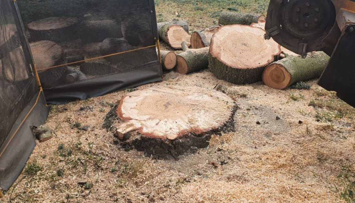 Tree stump grinding in Coxtie Green, near Brentwood, Essex. This large cedar tree was in the way of a children's play ar...