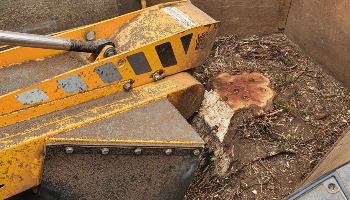 Tree stump grinding in Chedburgh, near Bury St Edmunds, Suffolk Here I removed a couple of conifer type tree stumps to m...