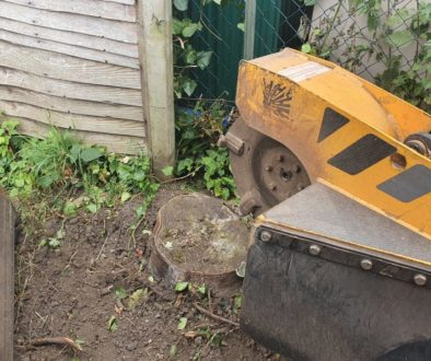 Tree stump grinding in Kelvedon, near Coggeshall, Colchester Essex. Here I was removing a variety of tree stumps to make...