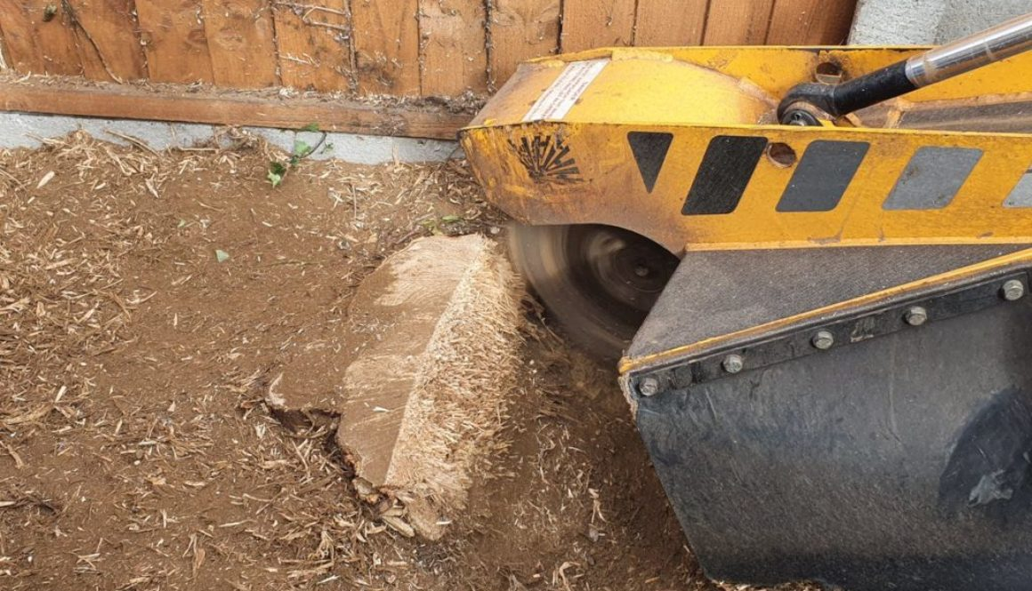 Tree stump grinding in Springfield, near Chelmsford, Essex. There was a variety of tree stumps to be removed in this par...