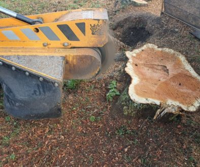 Tree stump grinding in Munden, near Maldon, Essex. Here I am removing some large conifer tree stumps that were close to ...