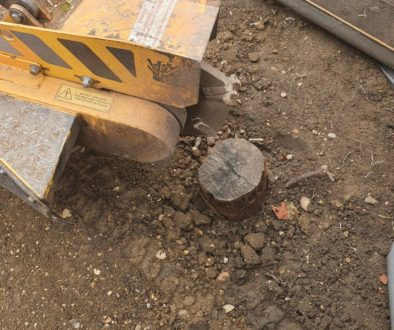 Tree stump grinding in Witham, near Braintree, Essex. Removing a selection of tree stumps in preparation for a garden ma...